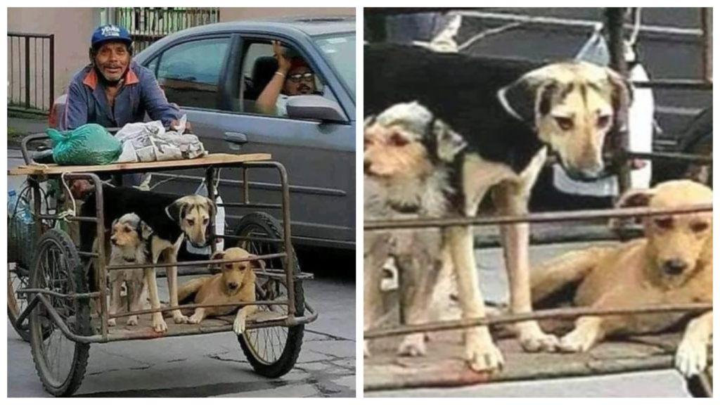 Каждый день старик упорно трудился, чтоб прокормить своих собак, которые всегда были с ним рядом