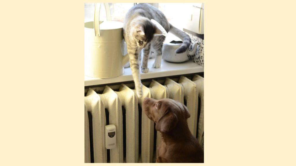 Котёнок учил манерам пса, который плохо себя вёл - кот запрыгивал на окно и лапкой давал псу по носу, чтобы тот исправлялся