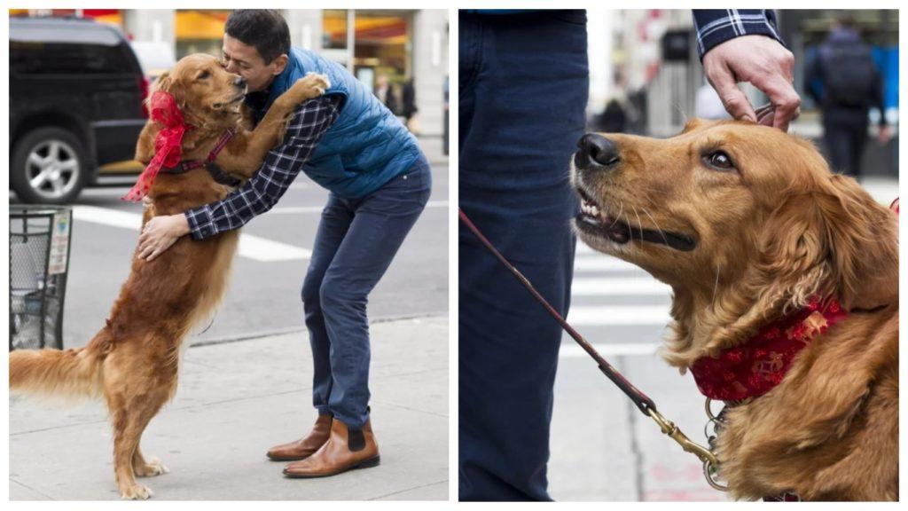 Собака гавкает и прыгает от радости, найдя владельца, которого не видела 10 дней