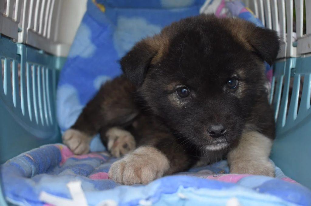 Спасение месячного больного щенка, который погибал под трубой теплотрассы