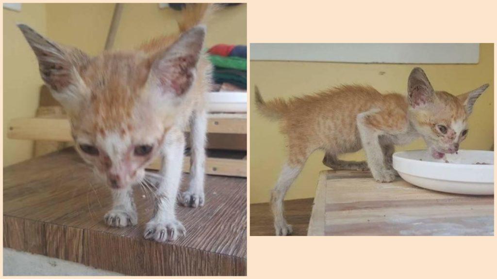 Уличный кот притащил к людям во двор худенького котенка и убежал, а малыш спрятался в гараже