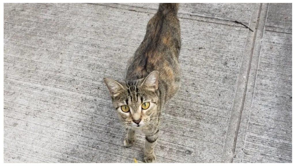 Спрятавшись в подвал, голодная беременная кошка звала людей на помощь