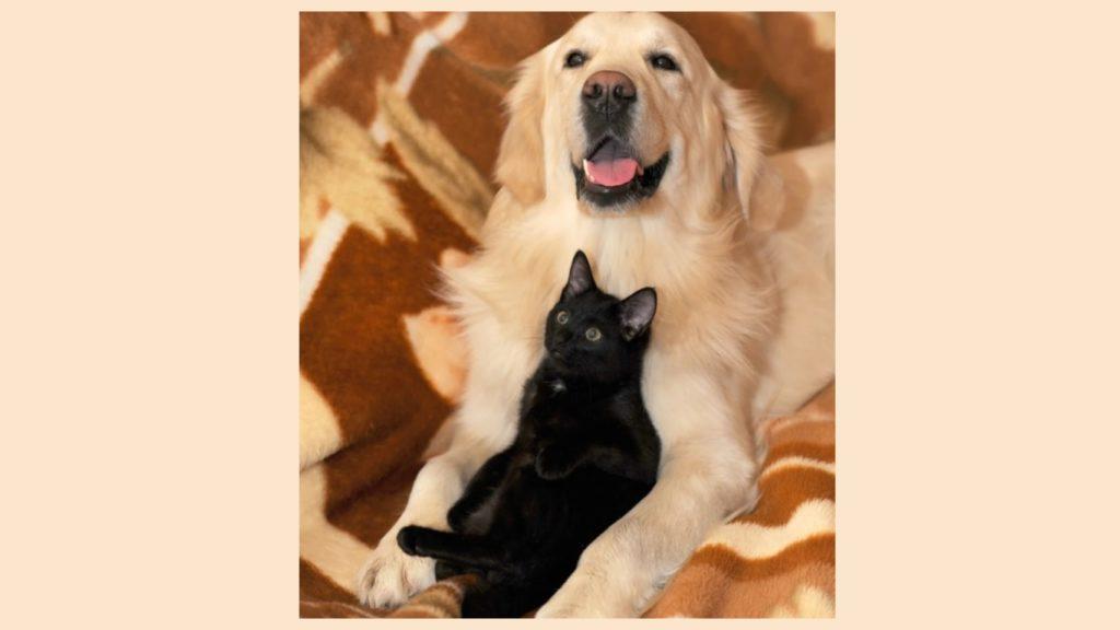 Пёс встретил чёрного кота возле магазина, который подошёл к нему и стал об него тереться