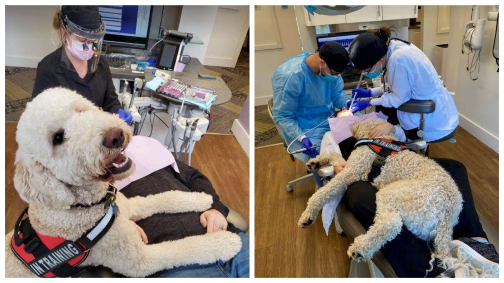Пес-дантист помогает пациентам в лечении зубов