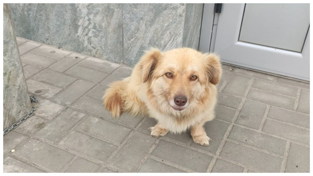 По воли судьбы, оказавшийся на улице пес, нашел себе нового хозяина
