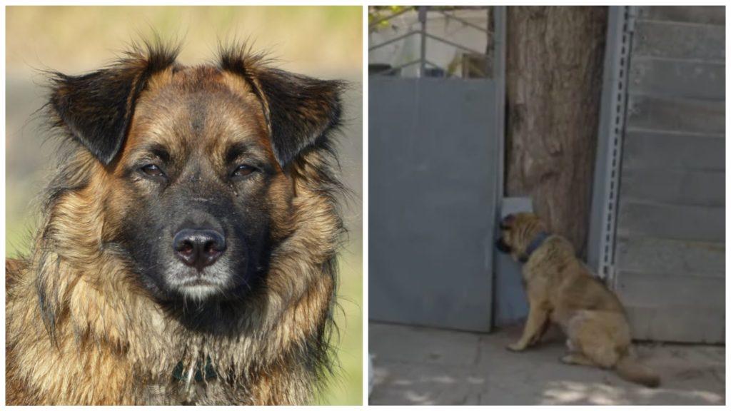 Выгнали собаку за спокойный характер - но она не разочаровалась в доброте людей