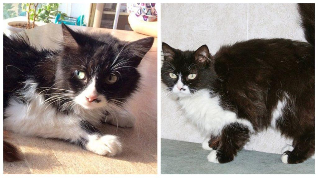 Попавшую в аварию кошечку спасли волонтеры, черная полоса жизни у нее закончилась и началась белая