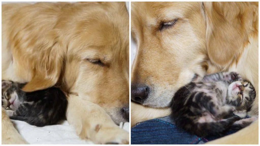Собачка, которую добрая женщина взяла с улицы, однажды сама принесла в дом маленького котенка
