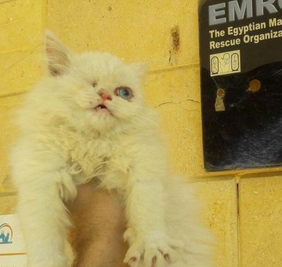 Одноглазый бездомный котенок получил шанс на лучшую жизнь