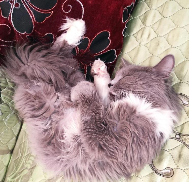 Кошечка с травмированной лапкой нуждалась в лечении и благодаря добрым людям она стала здоровой