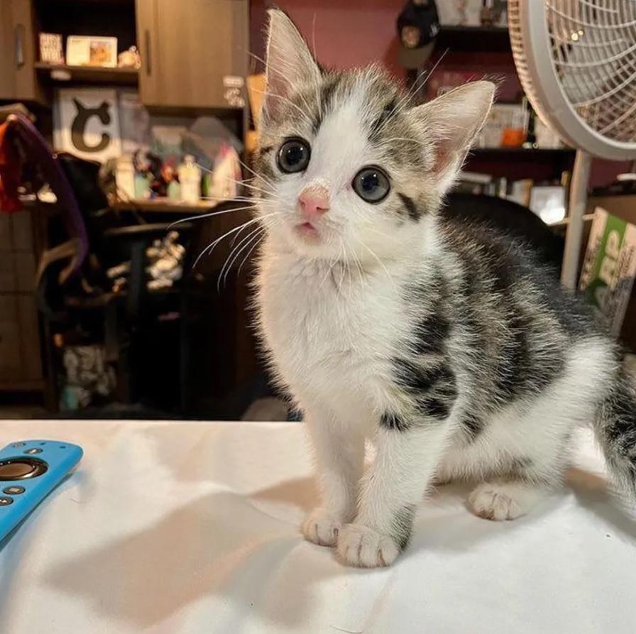 Котенок с милой мордочкой и очаровательными глазками очень счастлив после того, как уличная жизнь осталась позади
