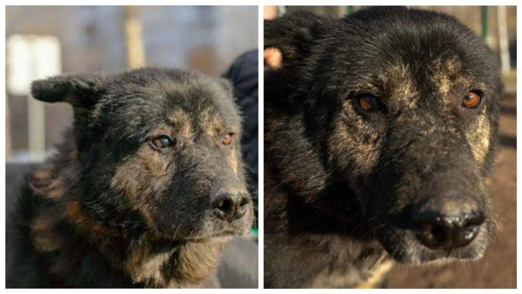 Приютский пес со сложным характером и специфической внешностью обрел семью и стал счастливым 🙏