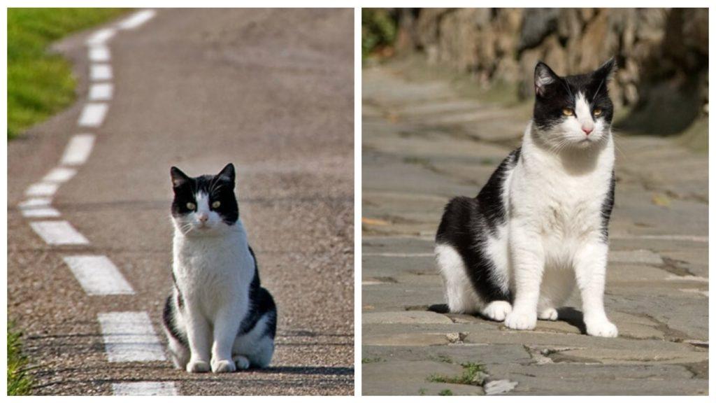 Хозяева выкинули кота из машины и уехали, а он растерянно смотрел на уезжающий автомобиль