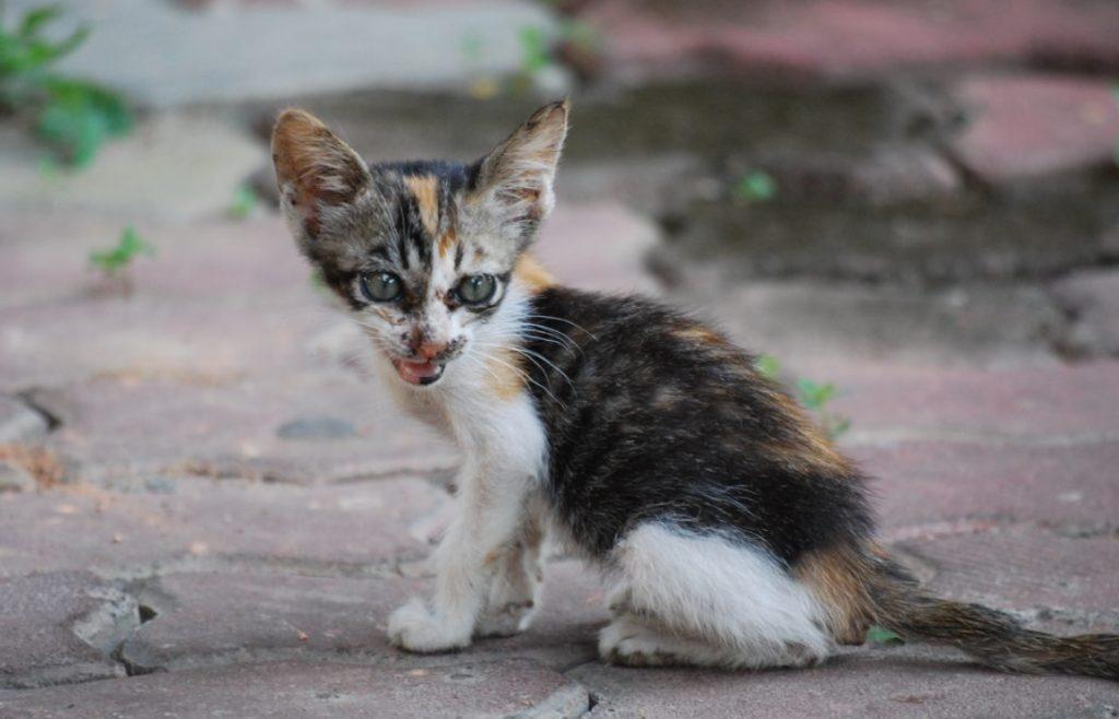 Худенький котенок-сирота чуть не погиб на улице