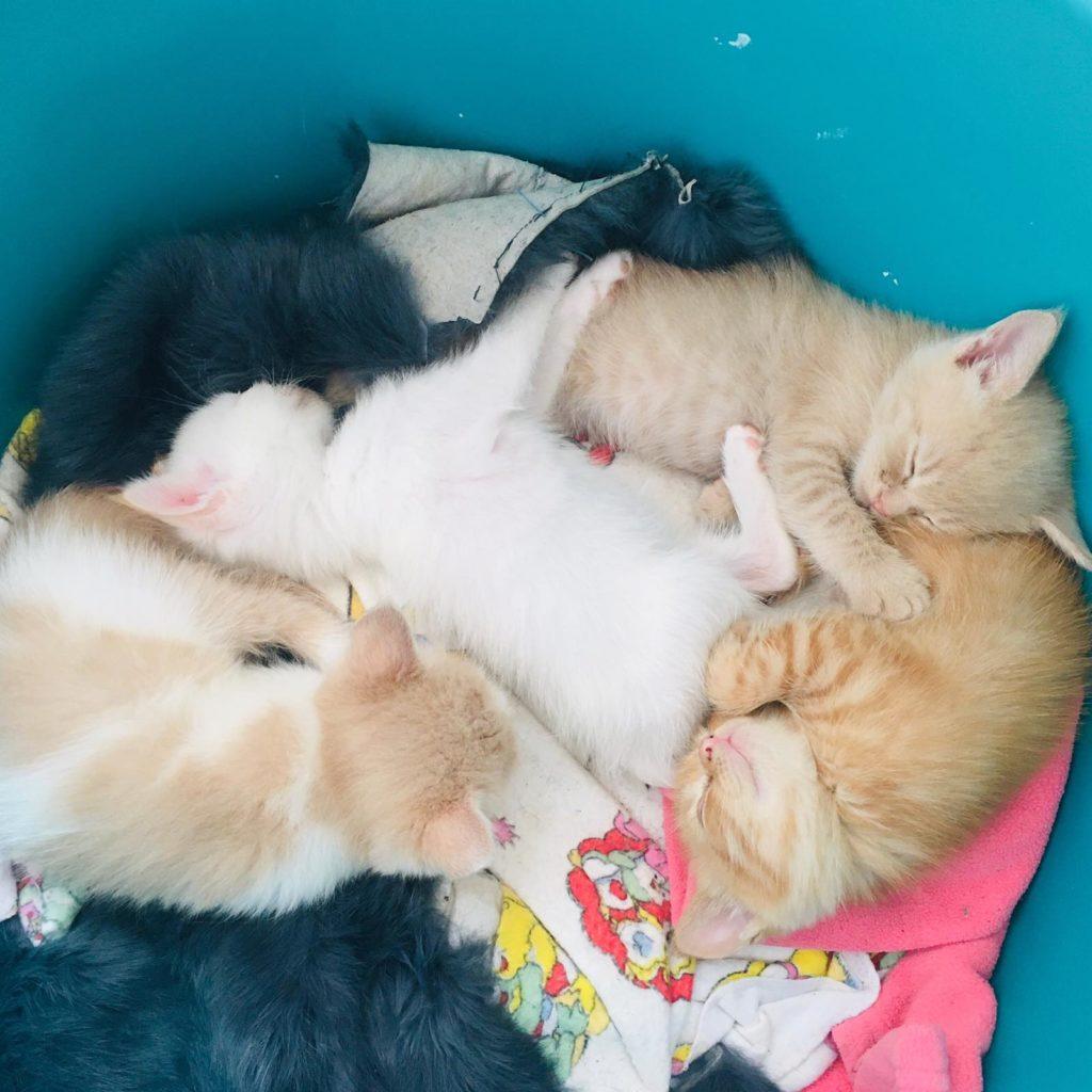 Работник спас находившихся в контейнере с бытовыми отходами месячных котят, которые могли погибнуть под прессом мусоровозки
