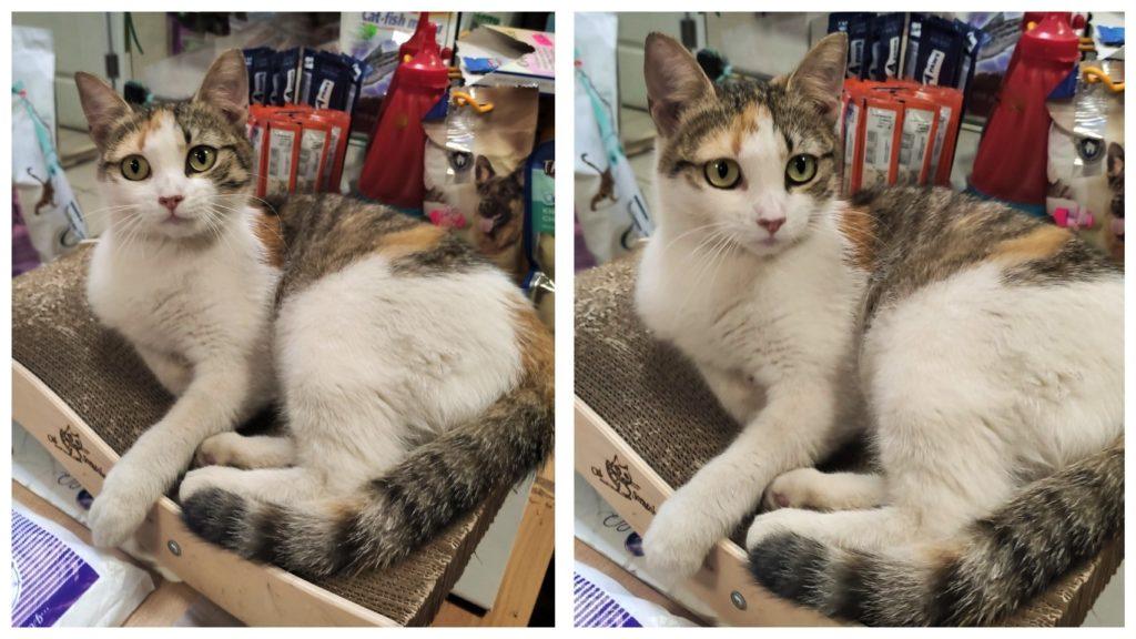 Спасенная кошечка с очаровательными глазками стала привлекать новых покупателей в зоомагазин