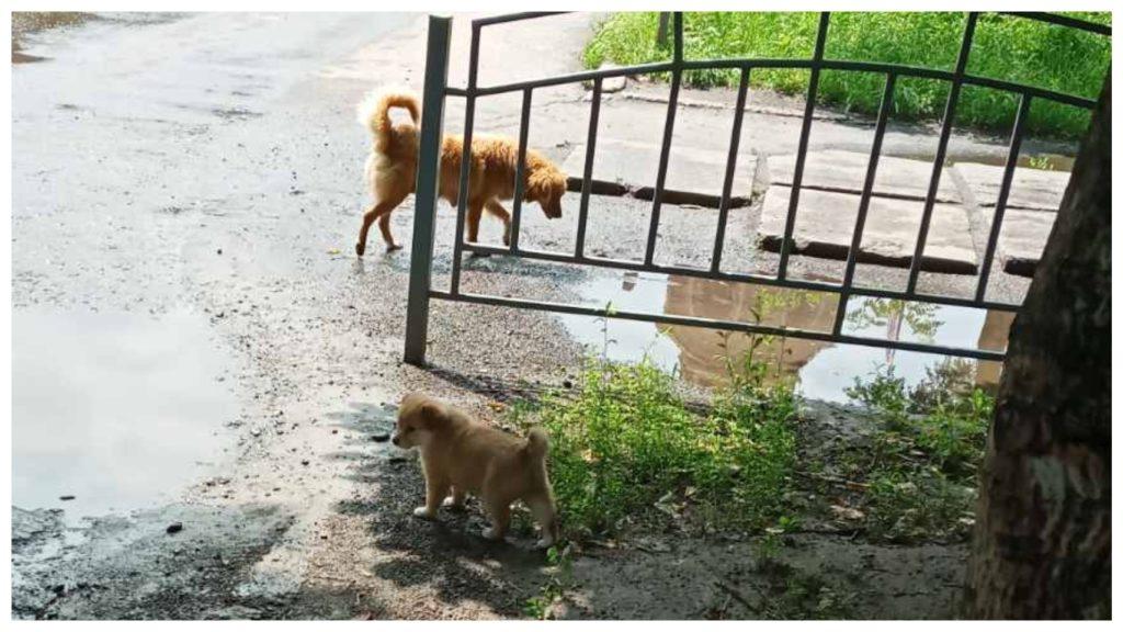 Маленький щенок чуть не погиб и так нашел себе хозяина, а его мама надеется на лучшее будущее