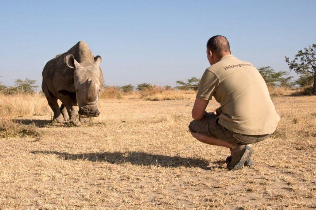 Работник заповедника заменил детенышу носорога отца и мать