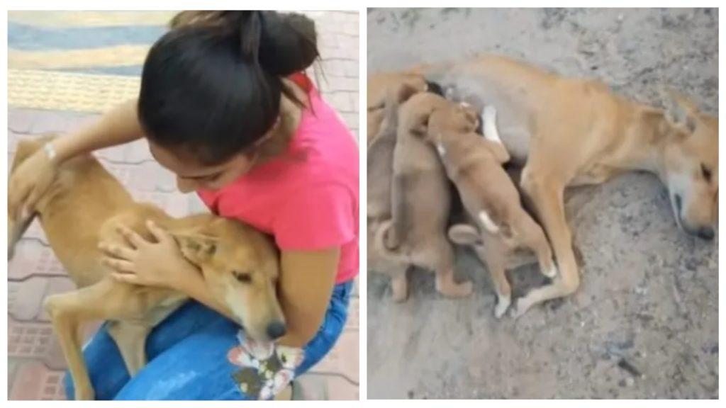 Волонтеры вовремя подоспели и спасли сильно исхудавшую и обессиленную собаку, которая кормила щенят