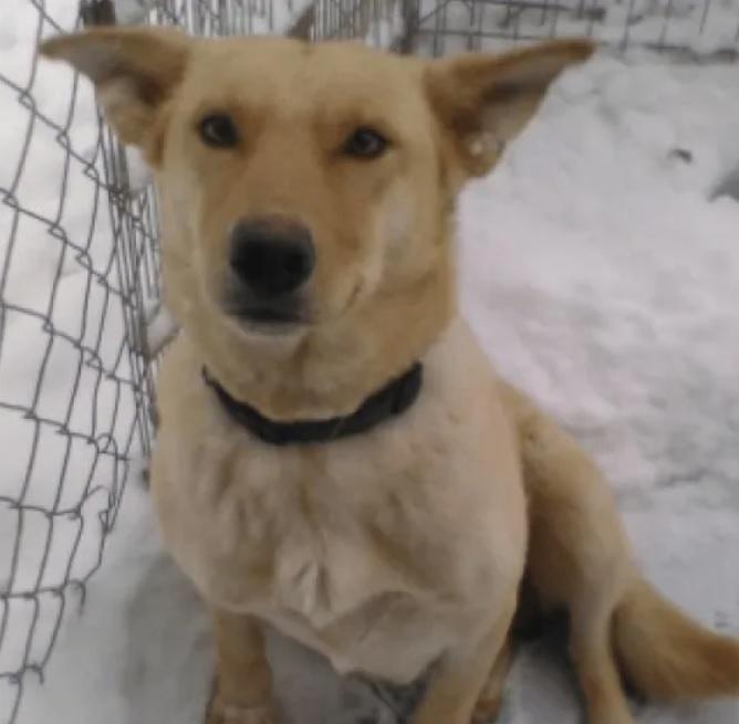 Собака, умирающая под снегом, проявила свою материнскую любовь и не оставила своих щенят одних