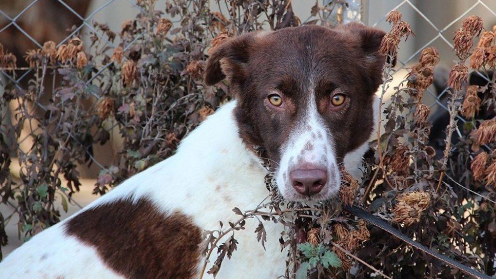 Собаку, которая попала в приют после аварии и которую удалось спасти, взяли на работу