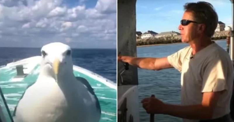 Рыбак спас чайку, которая сопровождает его в море более десятка лет