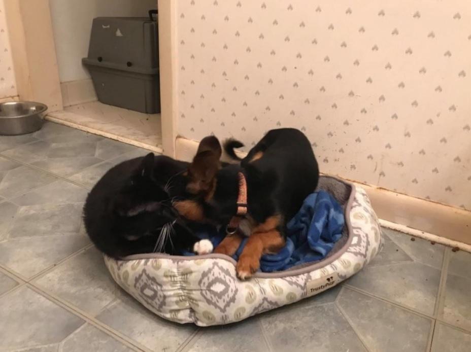 Уличные собака и кот вместе грелись от холода и вместе попали в приют
