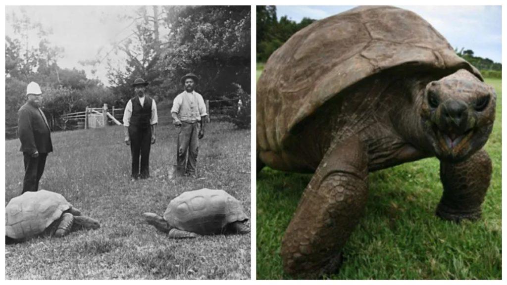 Самая старая жительница нашей планеты черепаха Джонатан, продолжает радоваться жизни