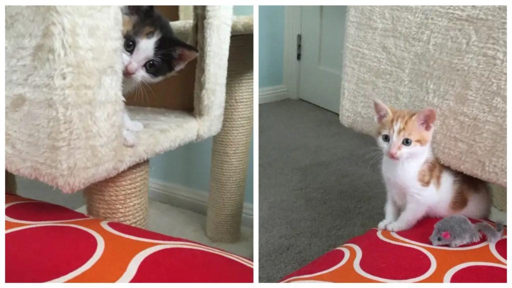 Кошка с больными котятами обратилась за помощью к врачам больницы