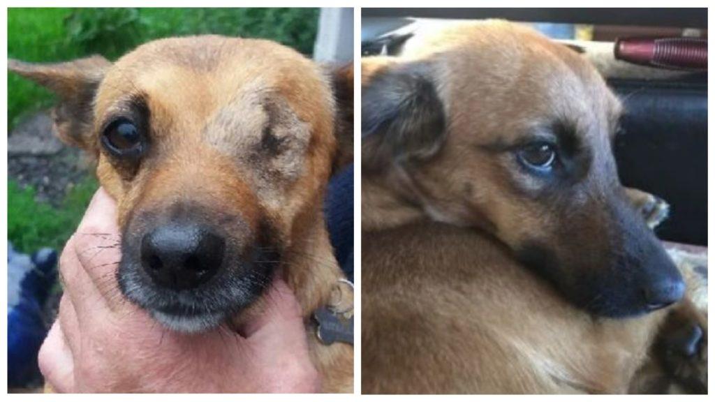 Женщина услышала плач щенка вовремя, он был обессилен, но его можно было спасти