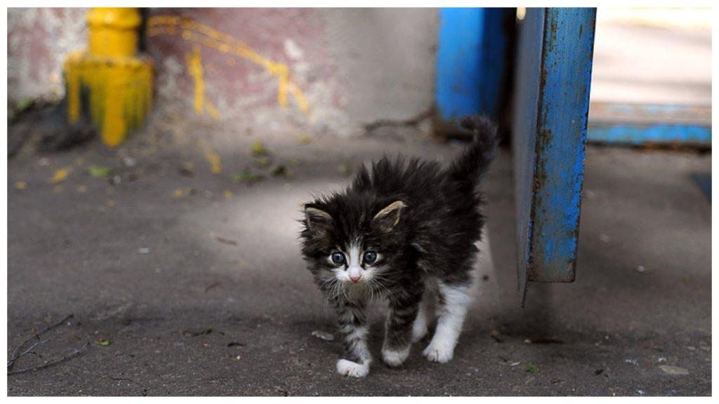 """""""Он тронул моё сердце!"""" -сказала девушка и поехала за уличным котиком в другой город"""