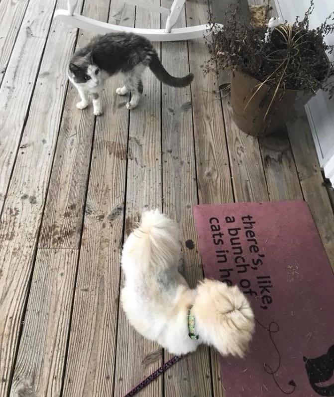 Больная бездомная кошка пришла в дом и попросила помощи