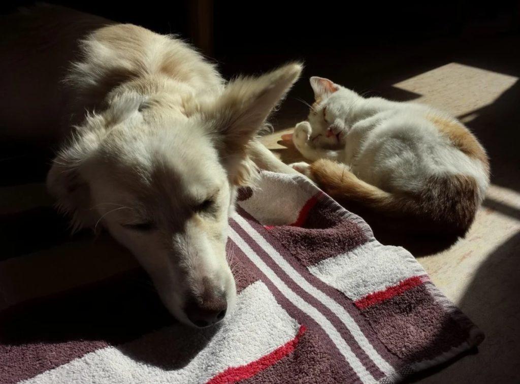 Пёс помог выбраться котёнку - который запутался в сетке