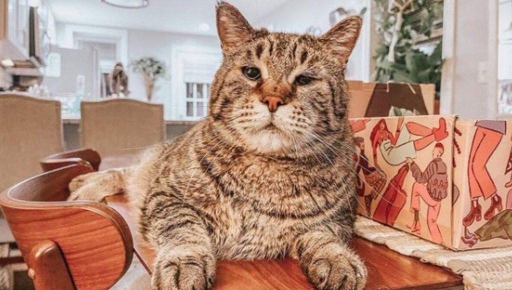 Дворовой кот огромных размеров стал звездой интернета и обрел семью