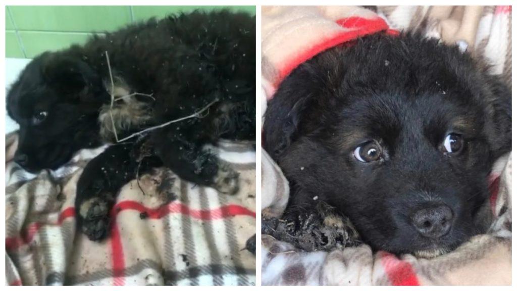 Брошенный щенок, весь измазанный смолой, сидел на мусорной свалке под проливным дождем