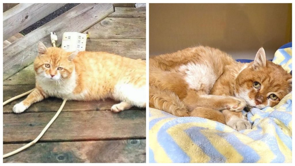 Трехлапый уличный кот стал домашним и сделал счастливой свою хозяйку