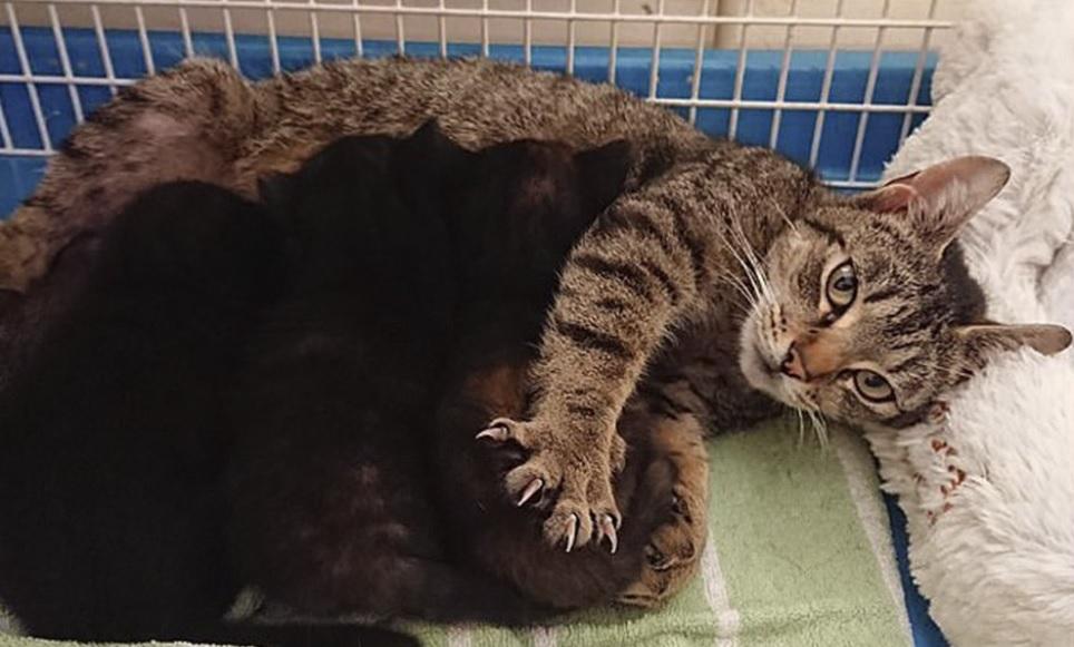 Кошка со своими новорожденными котятами устроилась в птичьем гнезде, выгнав оттуда хозяйку