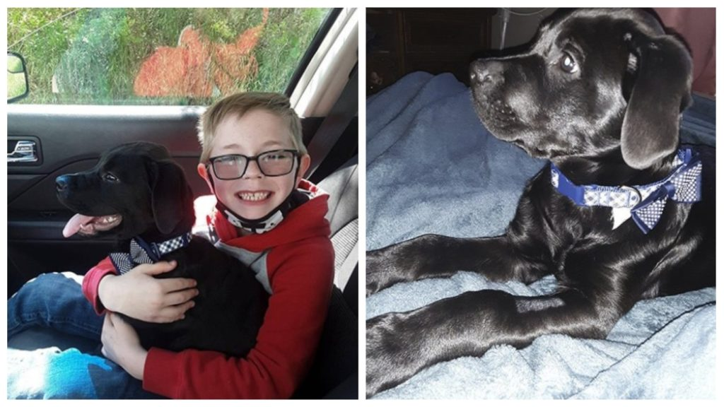 Чтобы спасти щенка - мальчик пожертвовал своей коллекцией марок и значков 👍