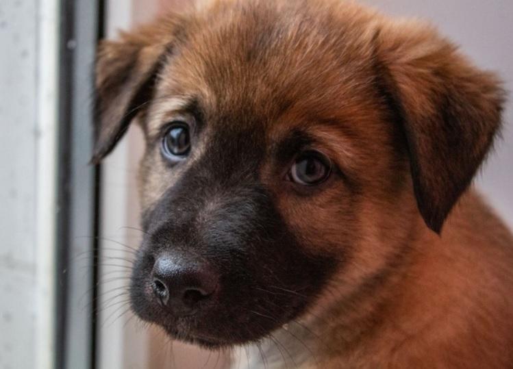 Сбитый машиной щенок истекал кровью, а рядом плакала мама- собака, но малышку спасли
