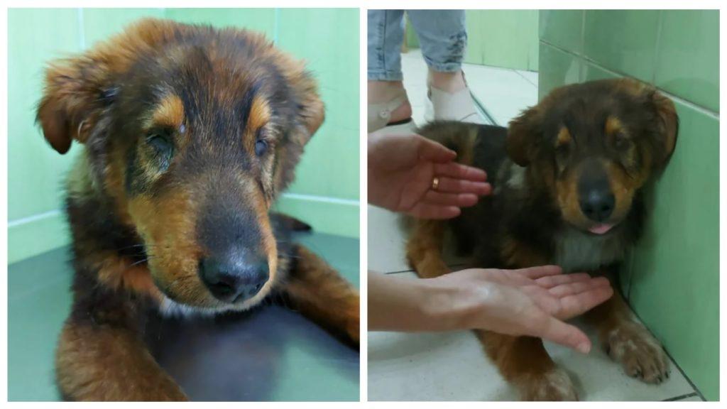 Слепой от рождения щенок пережил двойное предательство