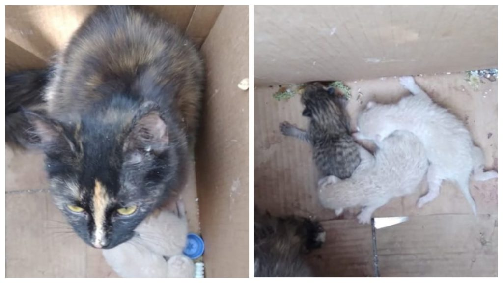 Мужчина спас котят и их маму, которые находились в запечатанной коробке под мостом