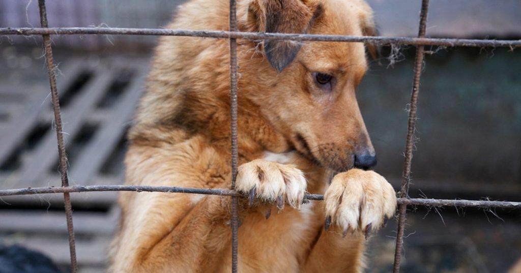Собака искала убежище в пятиэтажках, пытаясь спрятаться от холода. Люди были против такого соседства
