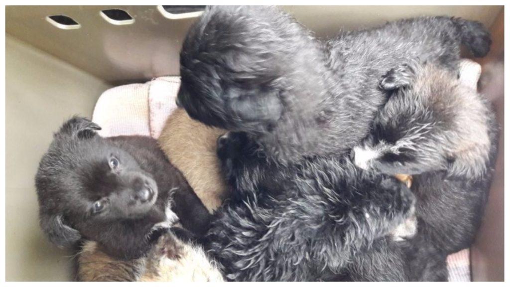 Жестокий хозяин выбросил на помойку в мешке новорожденных щенков, но их спасла добрая женщина