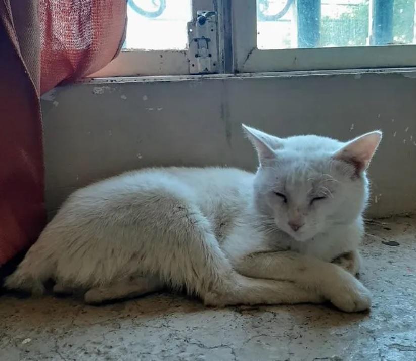Уличный милый котик умолял людей купить ему корм, а получил и корм, и дом, и любящую хозяйку