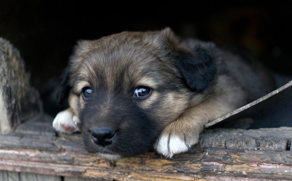 У бревна сидел маленький щенок, он растеряно озирался, не зная куда ему идти