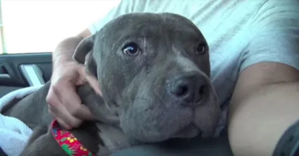 Мужчина спас породистого пса, с которым жестоко обошлись и выбросили на мусор