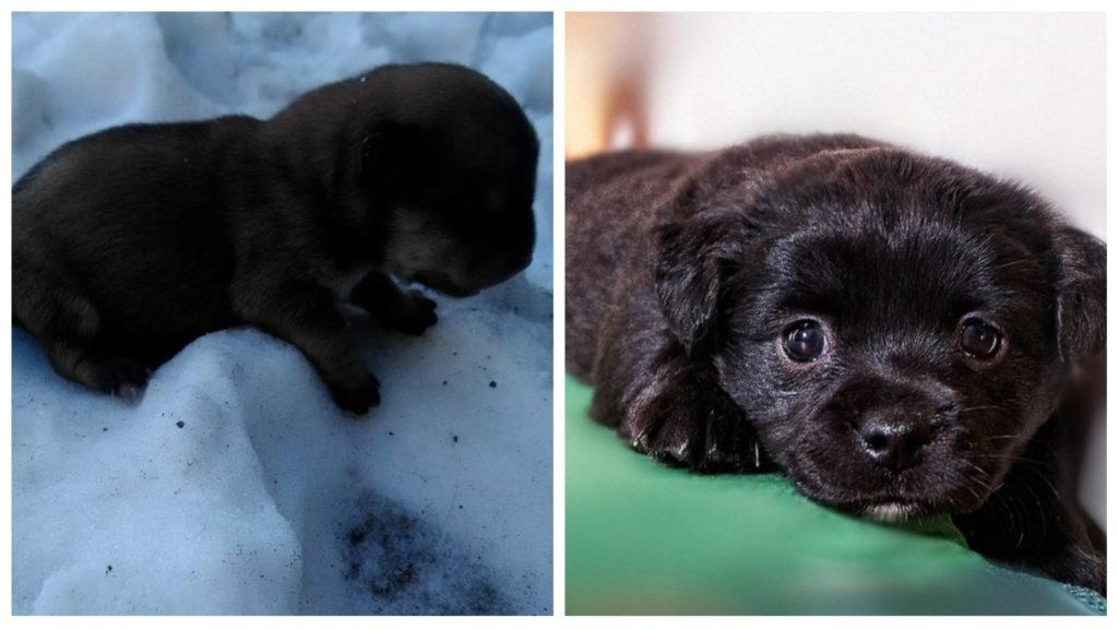 На улице в сильный мороз плакал щеночек, мечтая о тепле и заботе