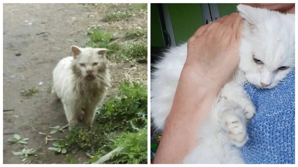 История брошенного старого кота, который ждал своих хозяев больше пяти лет