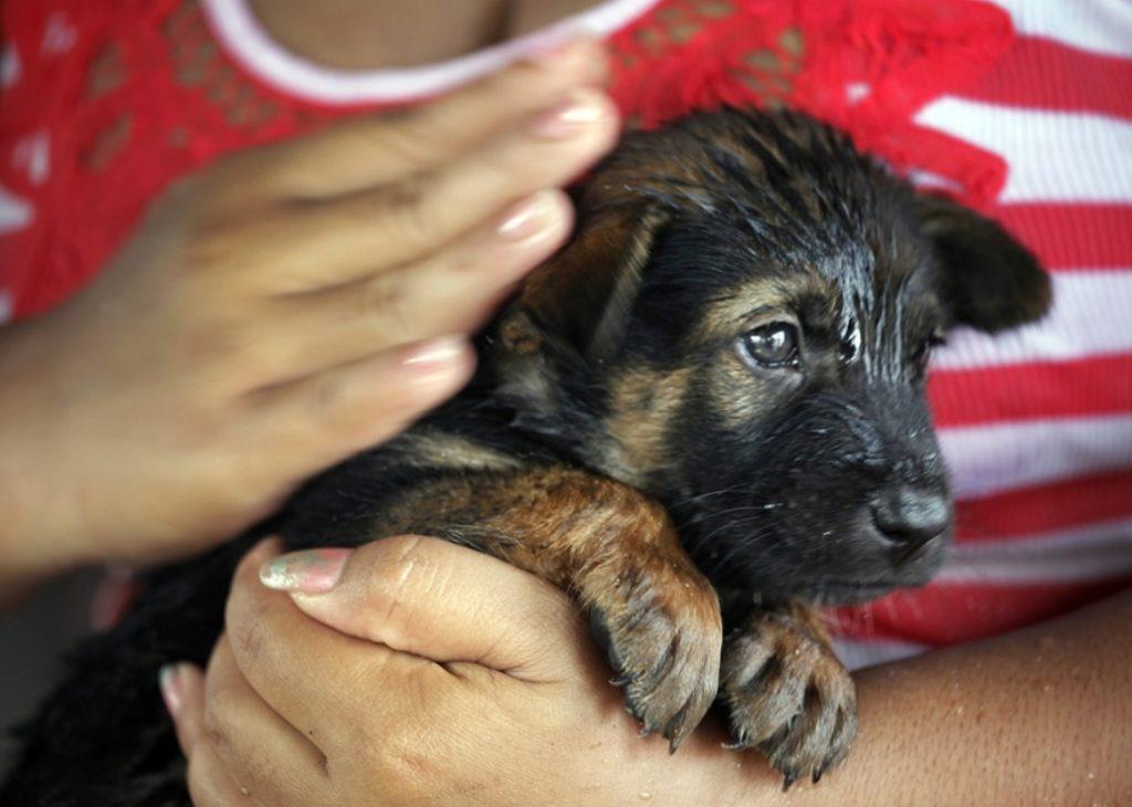 Девушка спасла слабого щенка, найденного на помойке