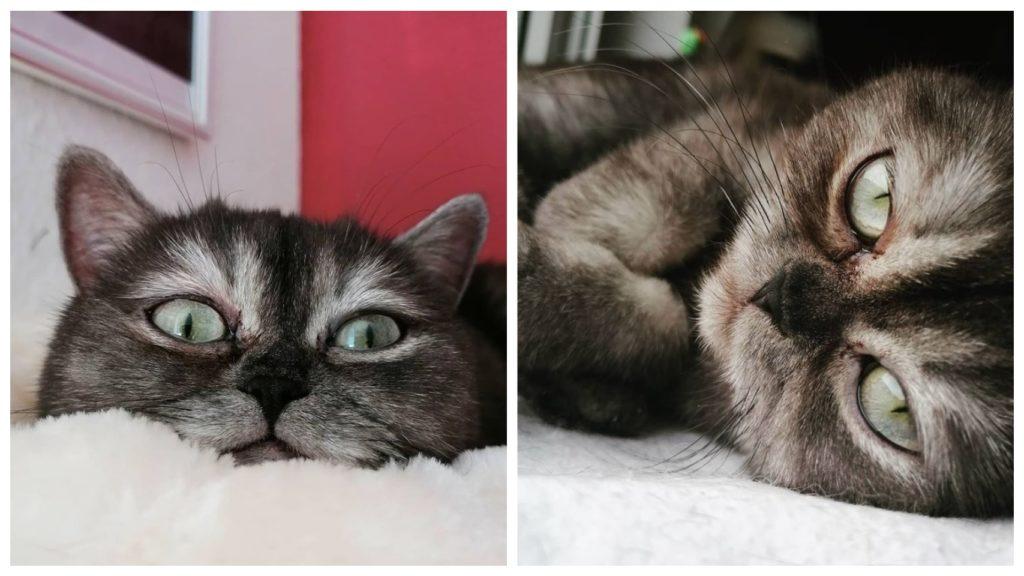 Кошечку никто не забирал из приюта, потому что она была мрачной и уродливой